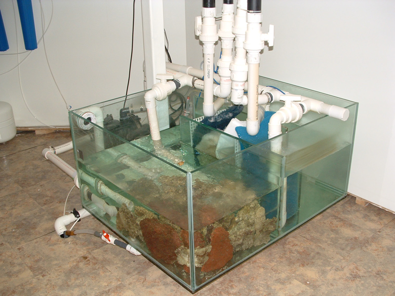 Large scale freestanding or recessed aquariums canada for Fish filter system